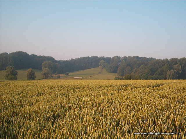 1 juli 2006 : Ellezelles (50 km)
