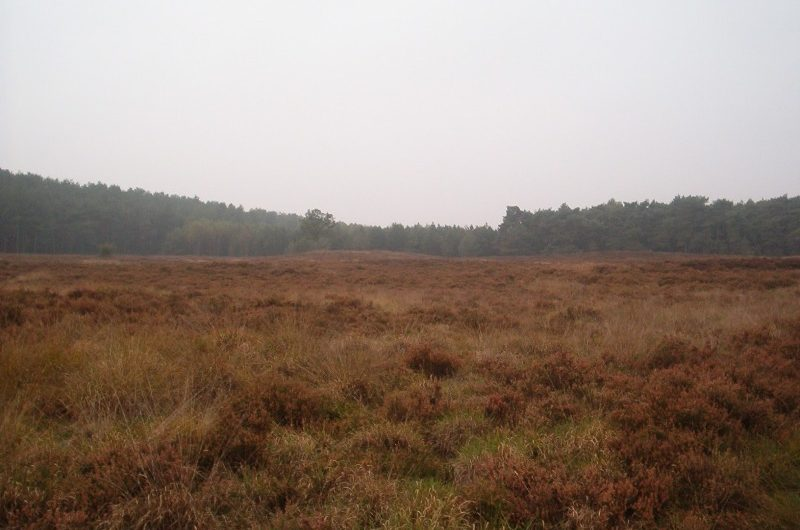 14 oktober 2006 : Lommel (42 km)