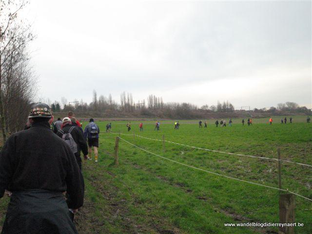 17 februari 2007 : Lauwe (Euraudax) (50 km)