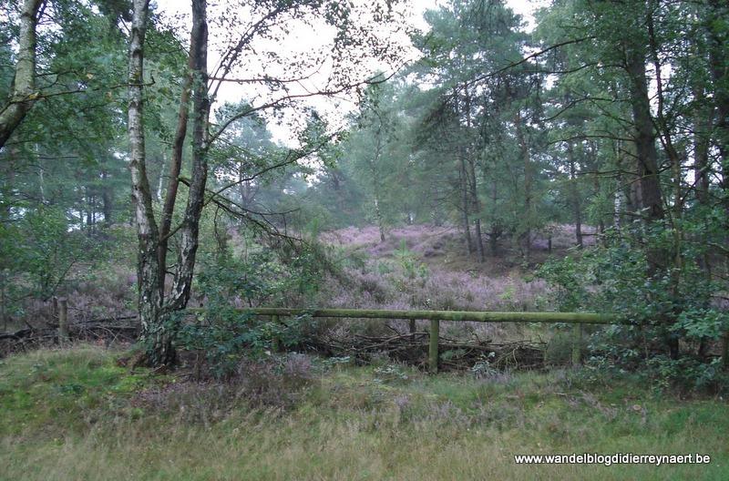 8 september 2007 : Opglabbeek (42 km)