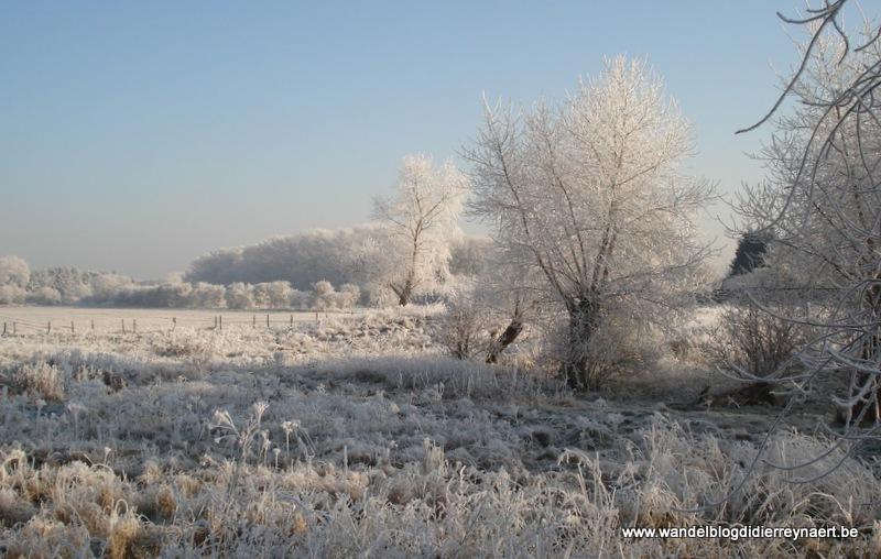 10 januari 2009 : Duinbergen (Euraudax) (50 km)