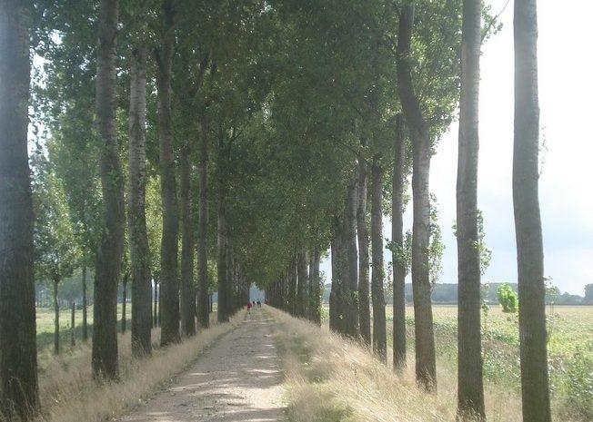5 september 2009 : Axel (Nl) (42 km)