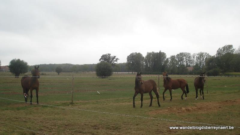 3 oktober 2009 : Ieper (Euraudax) (50 km)