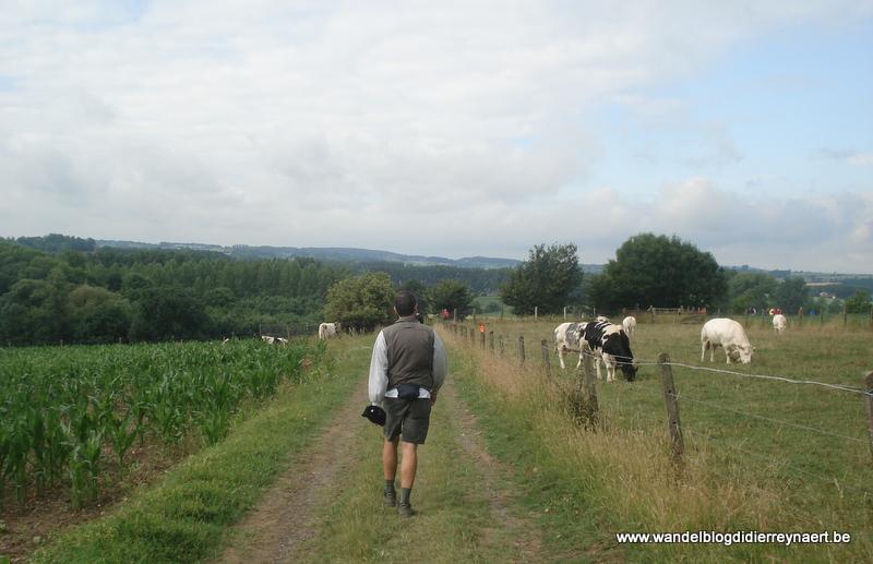 11 juni 2011 : Zingem (60 km)