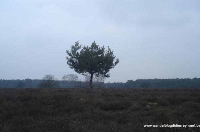 3 maart 2012 : Lommel (Euraudax) (50 km)