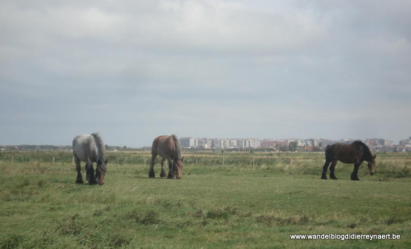 2 september 2012 : Nieuwmunster (19 km)