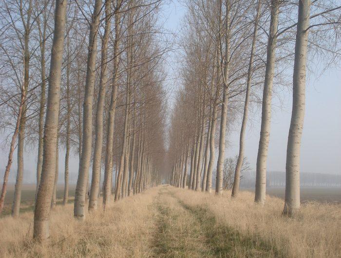 30 maart 2013 : Ijzendijke (33km)