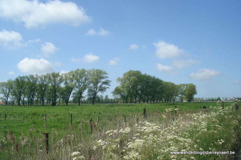 2 juni 2013 : Lissewege (Euraudax) (50km)