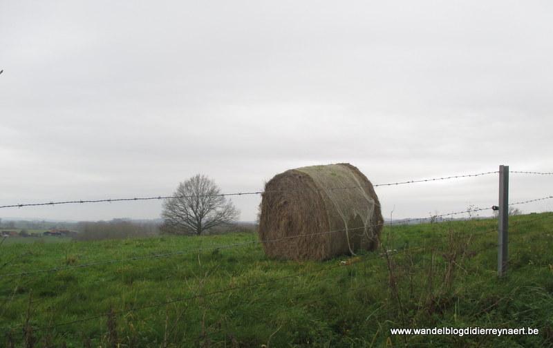 7 december 2014 : Flobecq (Adeps) (20 km)