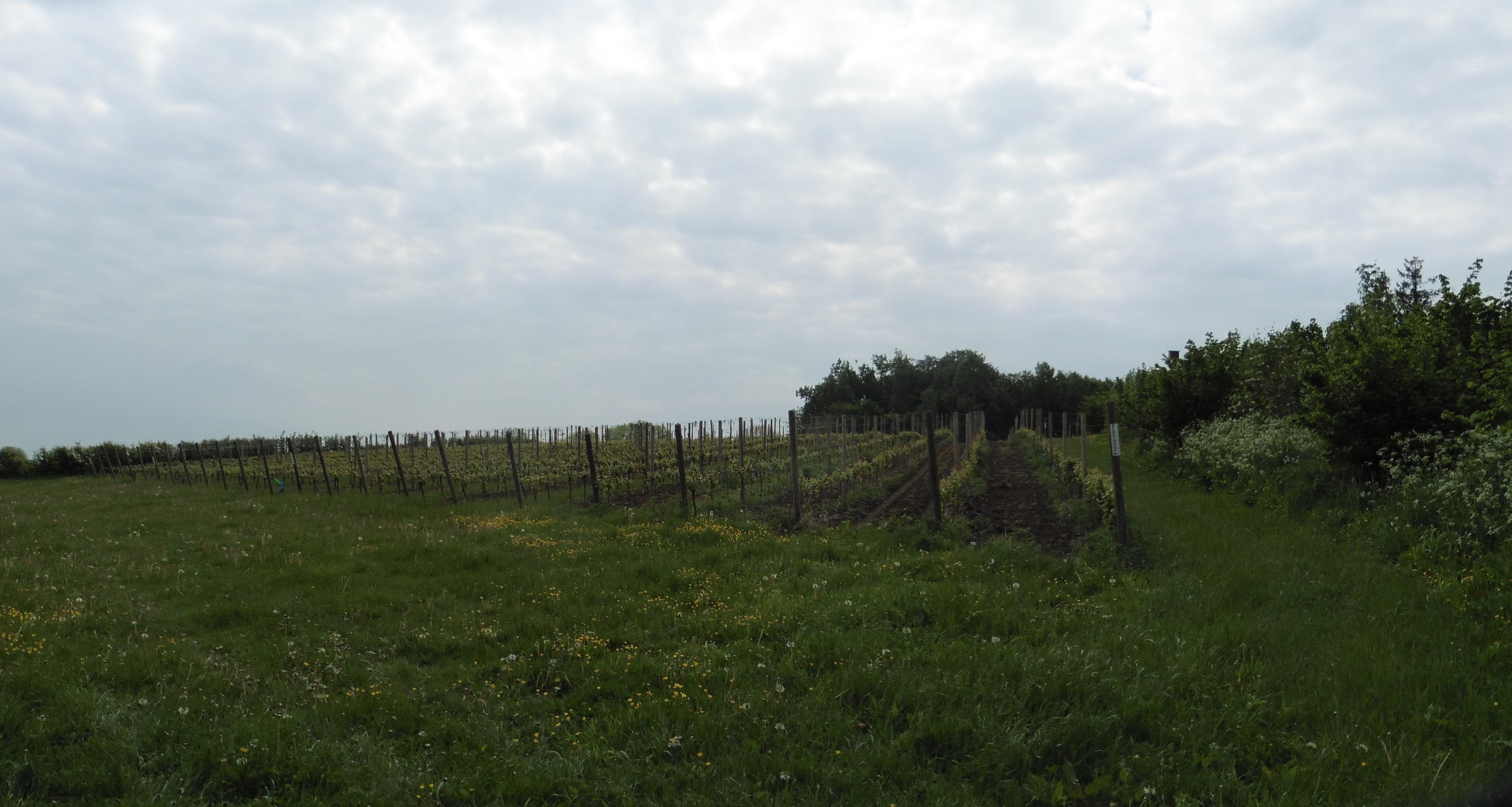 16 mei 2016: Dranouter (28 km)