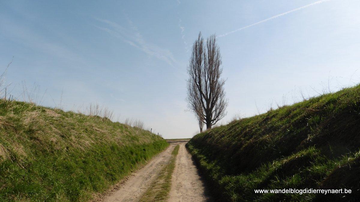 l'arbre de Promelles