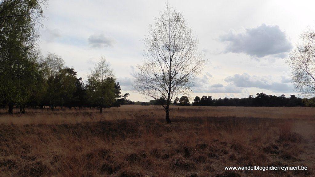 De Mispeleindse Heide in het Landgoed de Utrecht