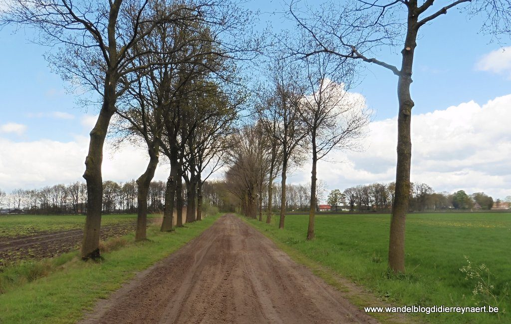 zandweg in de Brabantse Kempen