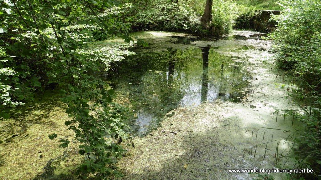 Bois de Stambruges: Fontaine Bouillante