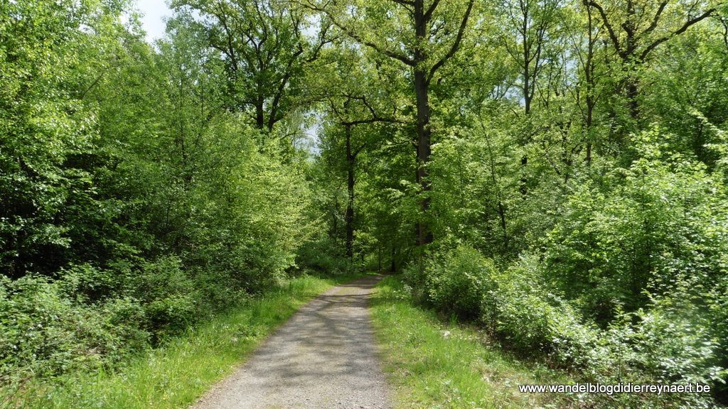 Bois de Stambruges