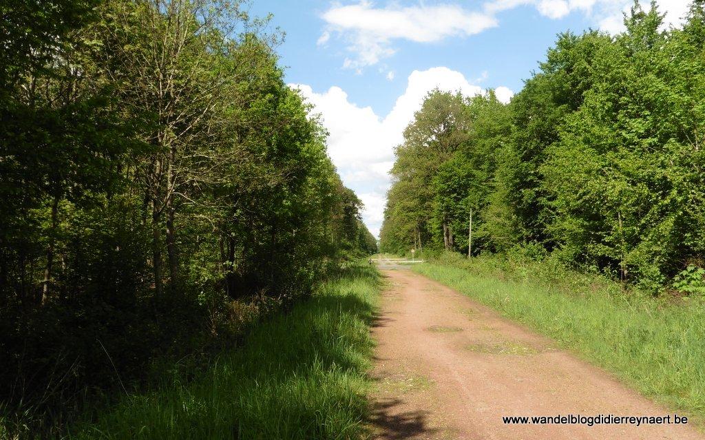 Forêt domaniale de Raismes-Saint Amand-Wallers