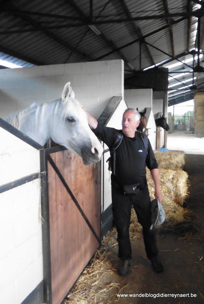 Manège Hill's Arabians