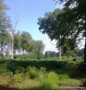 staatsbos van Flines-Lez-Mortagne