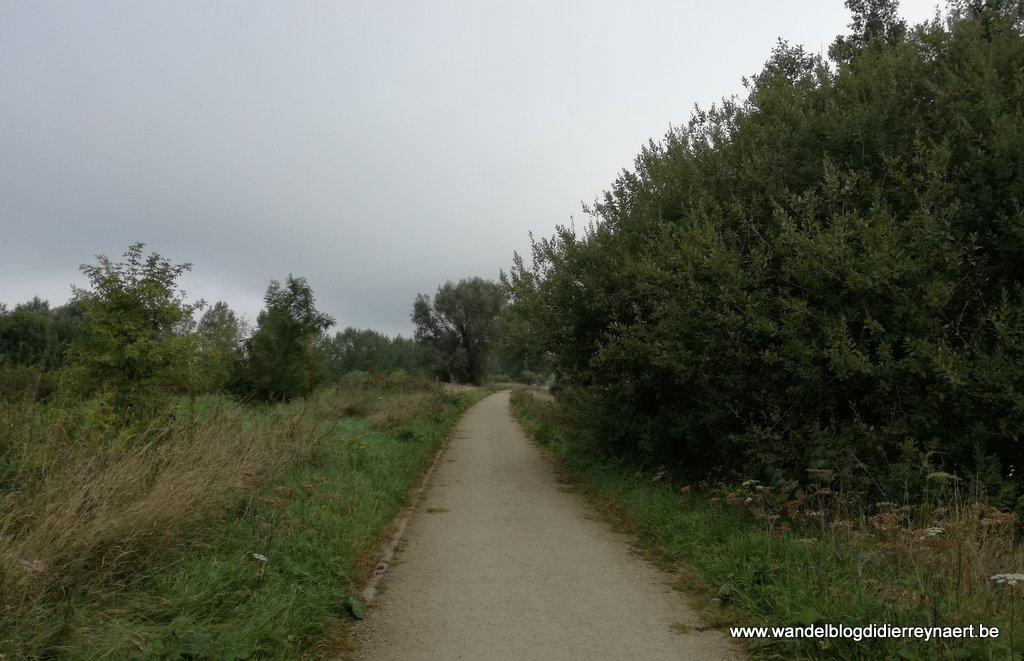 jaagpad langs de Schelde in Spiere