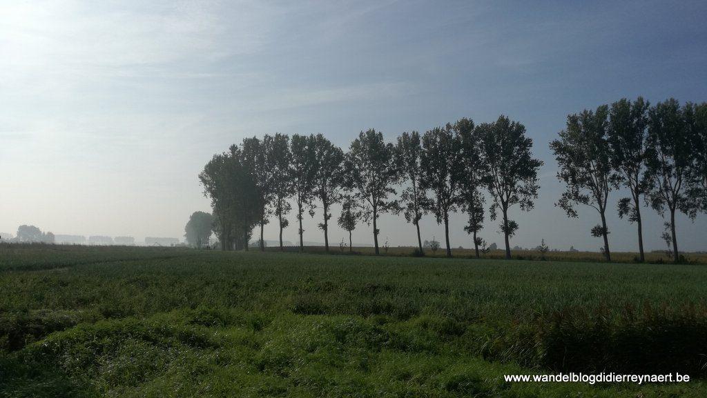 in de polders rond Groede