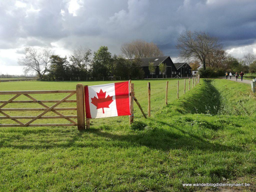 Canadese vlag: Maple Leaf Flag