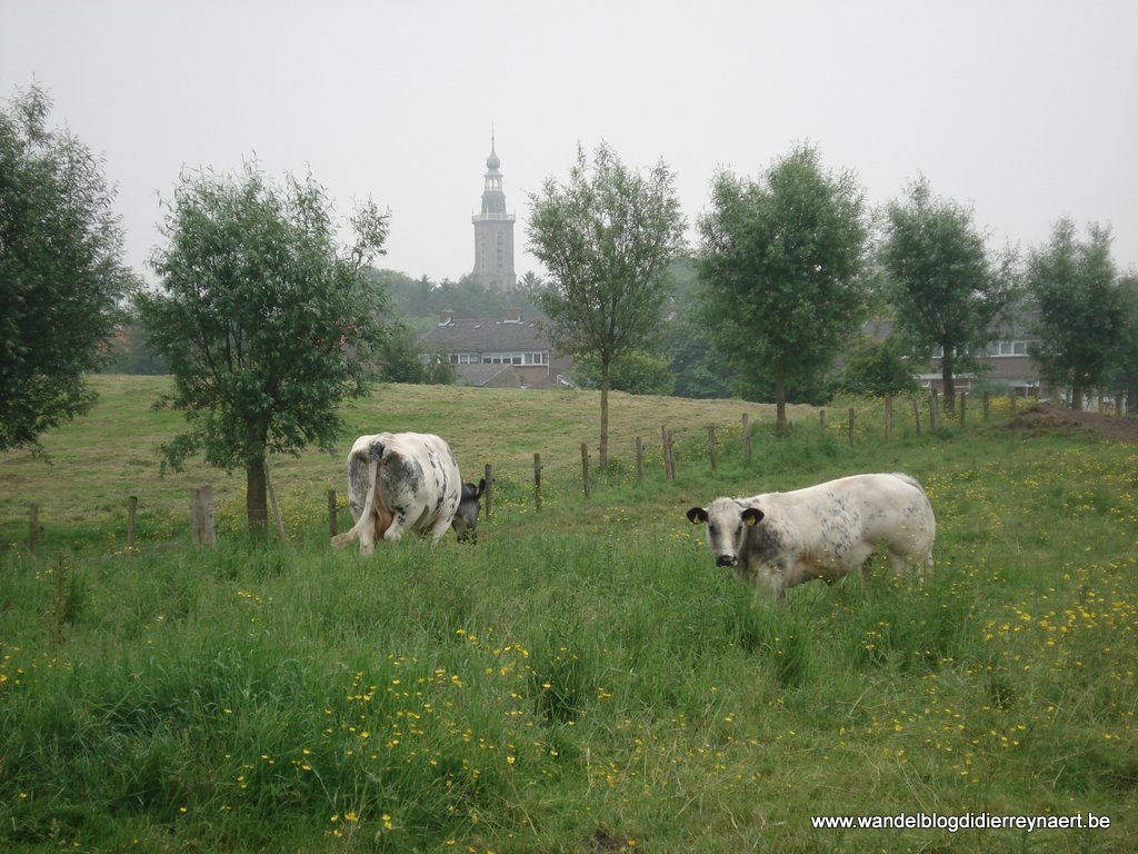 1 juni 2008: Aardenburg (Nl) (17 km)