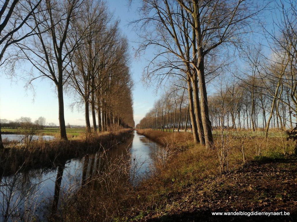 hoge, imposante bomen langs de Damse Vaart