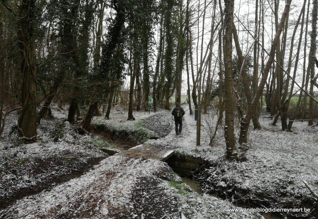 Kloosterbeekbos in Mollem
