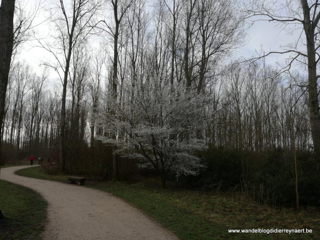Bois des Forts Coudekerque