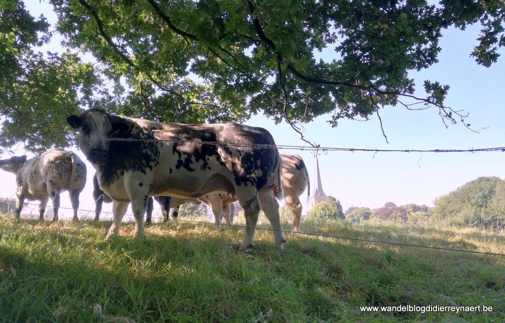 30 juni 2018: Schelderode (23 km)