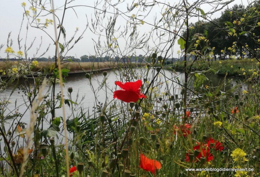 7 juli 2018: Diksmuide (24 km)
