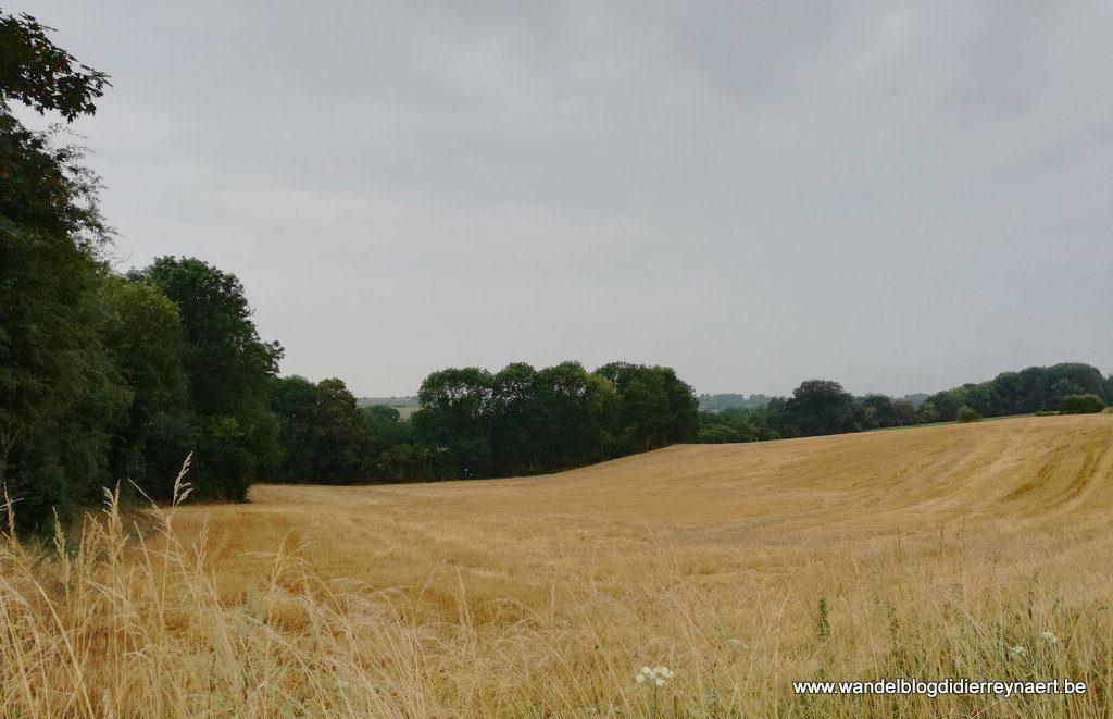 Gouden korenvelden