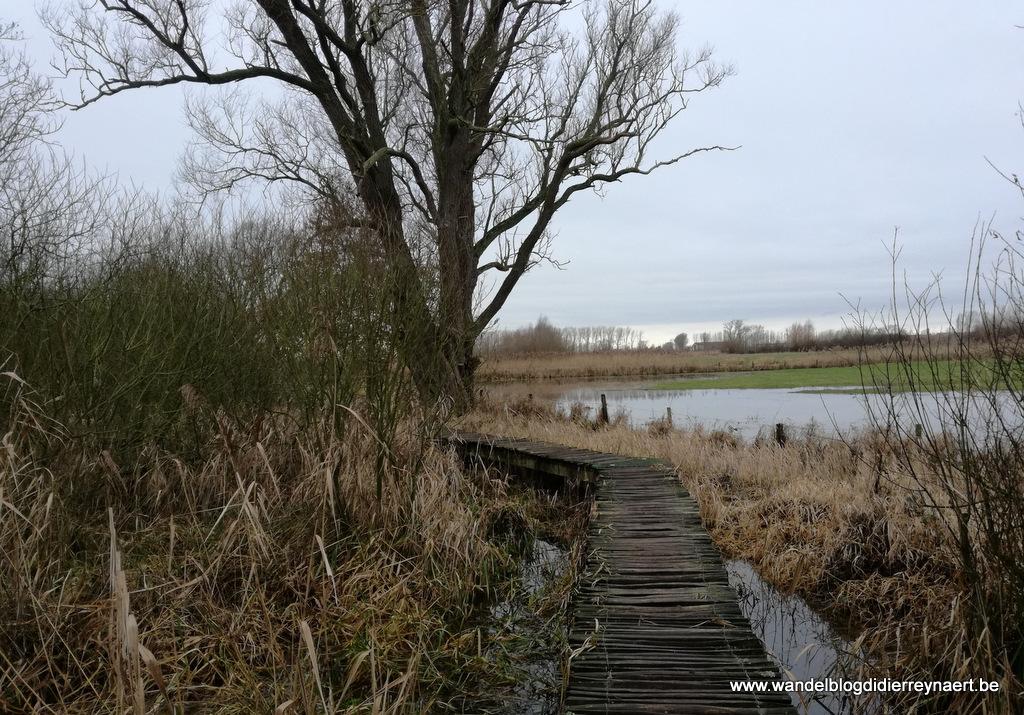 natuurgebied de Blankaart