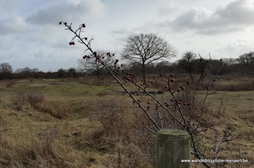 9 februari 2019: Adinkerke (24 km)