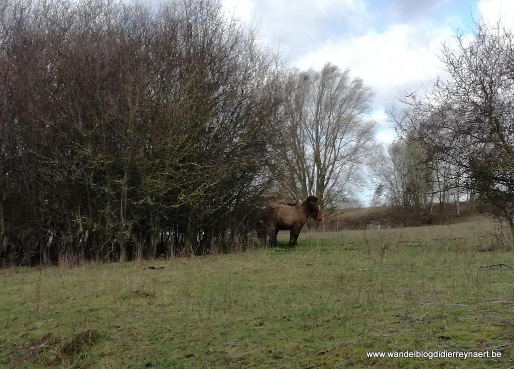 10 maart 2019: Rollegem (22 km)