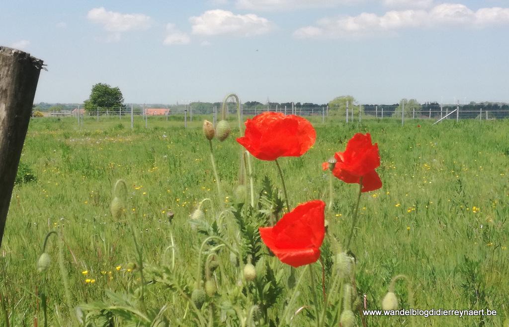 16 mei 2019: Hollebeke (13 km)