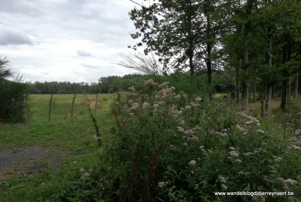 16 augustus 2019: Beernem (23 km)
