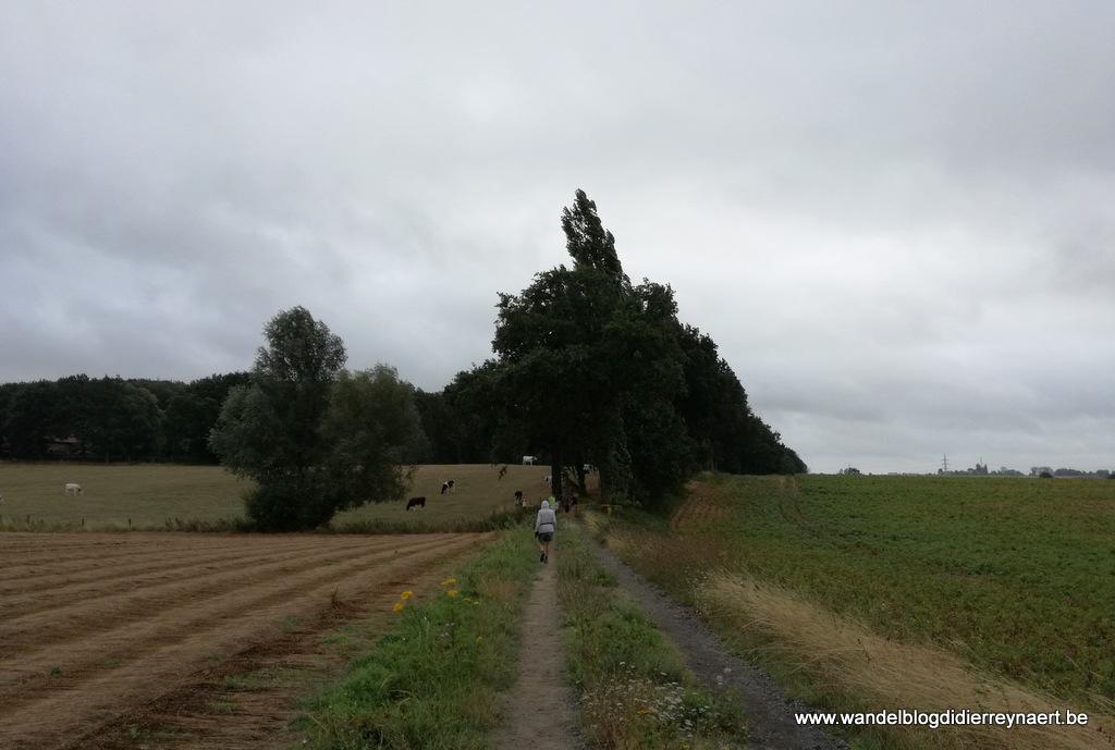 17 augustus 2019: Deerlijk (14 km)