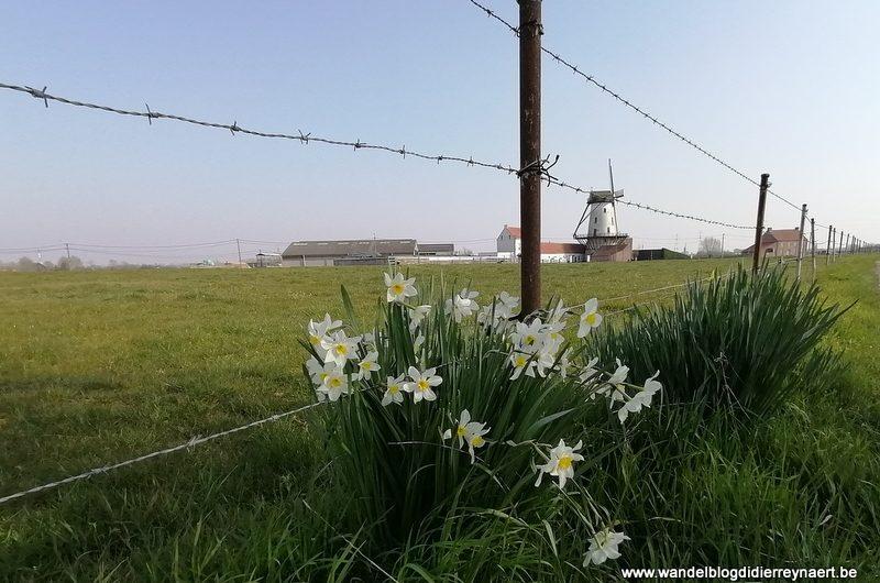 Doorheen Groot-Wevelgem (27 maart 2020)