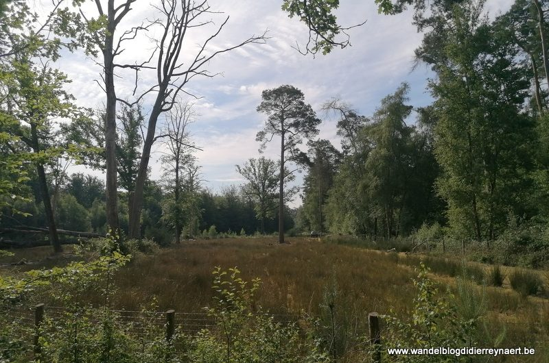 Wandelen in het Brugse Ommeland: door het Landschapspark Bulskampveld (3 juni 2020)
