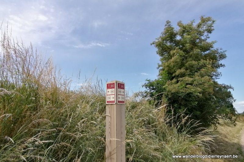 Een stukje Vlaamse Ardennen rond Zalardinge (20 juni 2020)