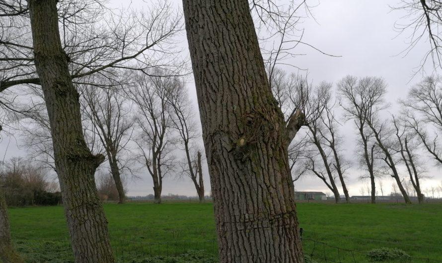 Tocht in de polders ten zuiden van Veurne (16 december 2020)