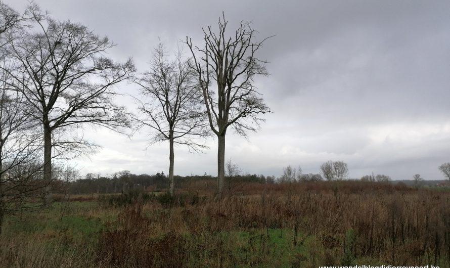 Wandelen tussen Oostkamp en Hertsberge en door het Kampveld (24 december 2020)
