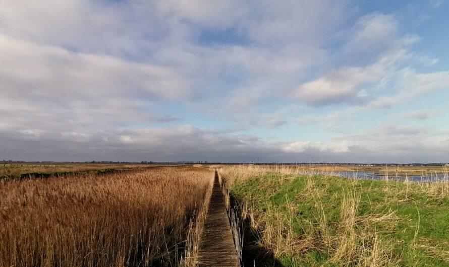 De Uitkerkse Polder tussen Zuienkerke en Blankenberge (17 januari 2021)