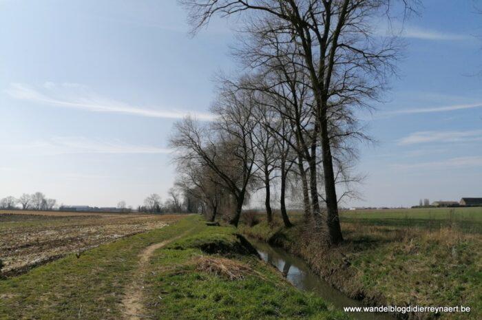 Hoppeland tussen Elverdinge en Poperinge (24 maart 2021)