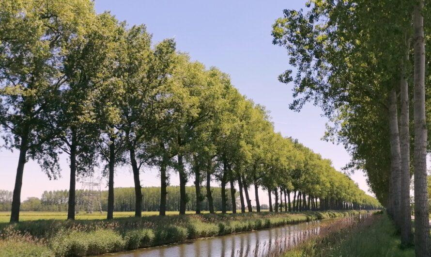 Een stukje Meetjesland: langs het Schipdonkkanaal en door het Leen (6 juni 2021)