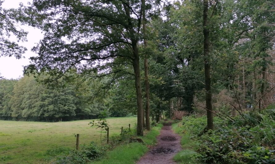 Het Meetjesland: Lembeekse bossen en het Bellebargiebos (10 augustus 2021)