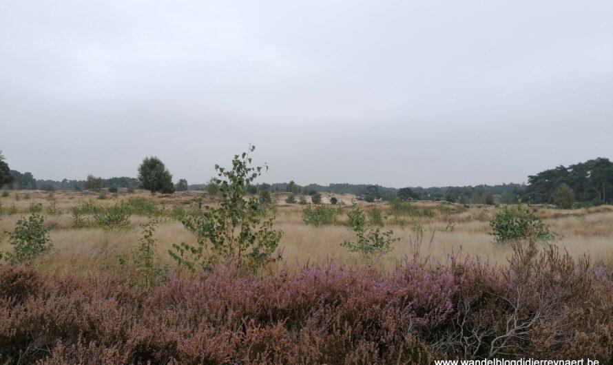 Wandelen in Lunteren, een groen dorp in de Gelderse vallei (Nederland) (25 september 2021)